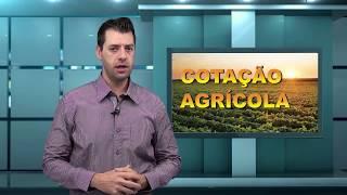 Capa do vídeo Paraná é destaque em alimentos, veículos, papel, celulose e madeira