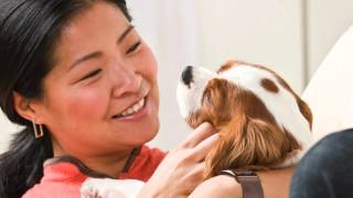Research Shows You May Give Your Pet The Flu