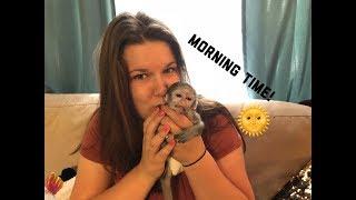 Video Baby monkey morning time | Max's morning Routine MP3, 3GP, MP4, WEBM, AVI, FLV September 2018