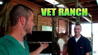 New Large Animal Vet on Vet Ranch!