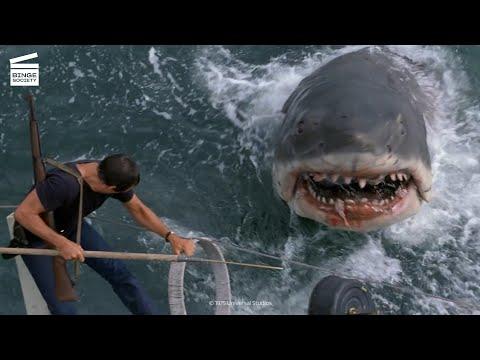 Les Dents de la Mer : Brody tue le requin