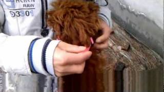 How To Brake Your Pets At Emergency With Our Collar And Leash Comb.