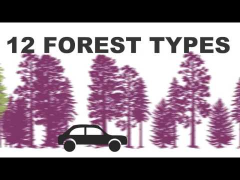 Forest Fact Break - Forest Types