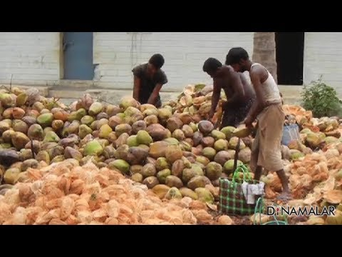 Coconut price on 'top' by productivity