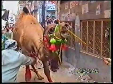 camel qurbani - imtaiz urf billu qasai 03017441303.