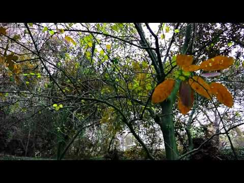 NATURE (demo video) by {NANHRA CREATIONS $ YOUNG BOY STUDIO}