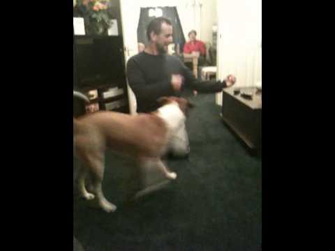 Clever dog – sam (dog tricks)