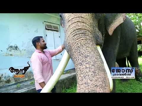 Video Palackathra Abhimanyu (aana peruma epi - 32 ) download in MP3, 3GP, MP4, WEBM, AVI, FLV January 2017