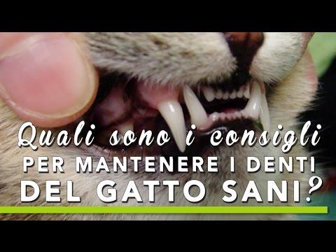 consigli per mantenere i denti del gatto sani