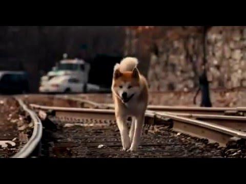 Хатико: Самый верный друг / Hachi: A Dog's Tale (2008) - Трейлер