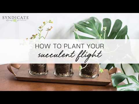 How to Plant Your Succulent Flight