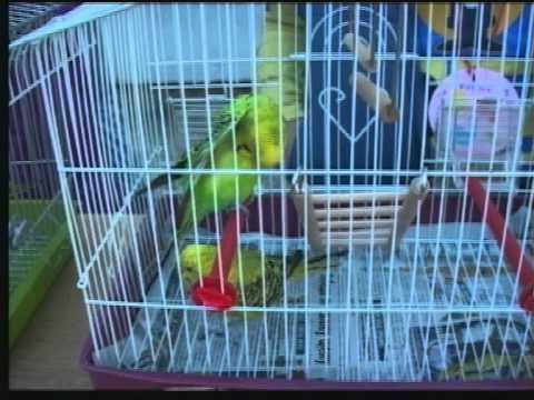 Izložba ljubimaca i kućica za ptice