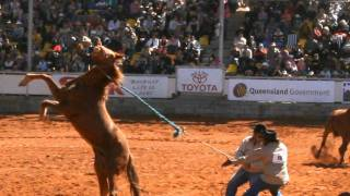 video y letra de El toro espina (audio) por 8 Segundos