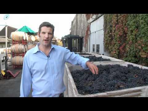 Destination Livermore: Wente Vineyards