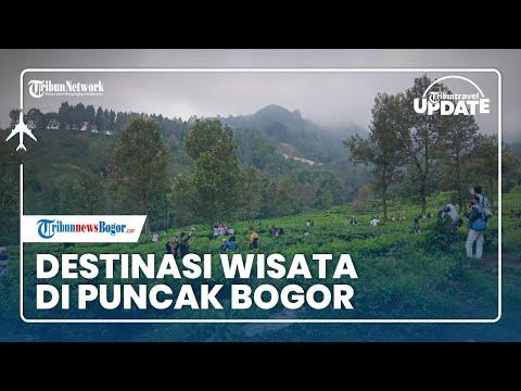 🔴 TRAVEL UPDATE: Berkunjung ke Kebun Teh Gunung Mas di Kawasan Puncak Bogor