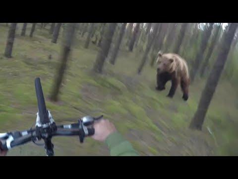 ciclista inseguito da un orso in mezzo al bosco!