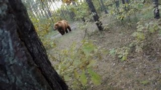 Video Bear Attack, Man is trying to run away from attacking Bear: GoPro MP3, 3GP, MP4, WEBM, AVI, FLV Agustus 2017