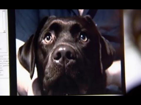 The Secret Life of Dogs (Amazing BBC Documentary)