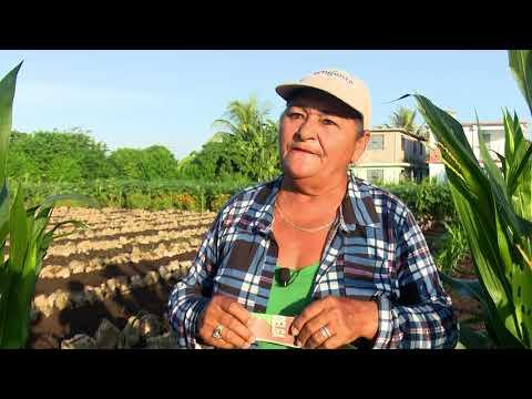 Crecen en Granma patios familiares para el cultivo de hortalizas y vegetales