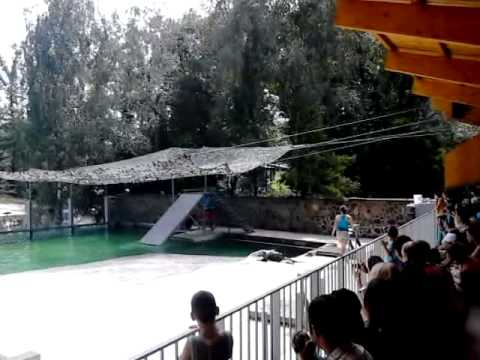 Seal show at the Zoo of Nyíregyháza