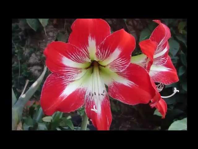 Las flores mas hermosas del mundo top 25 - Flores mas bonitas ...