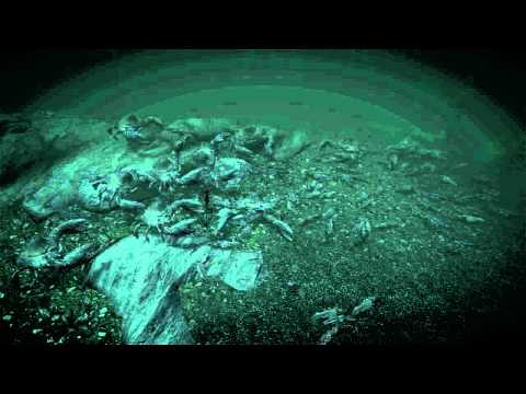 XtremeScope - Here we have an Epic underwater battle where 100 slaughter fish go up against 10 mud crabs. It was a close battle. Feel free to leave your battle suggestions...