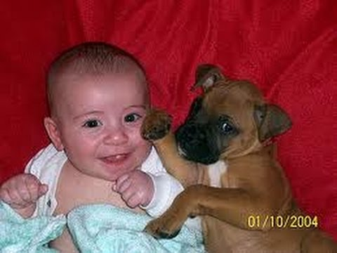 babies - Funny Baby video Funny Boxer video Funny Dog video Funny German Shepherd video.
