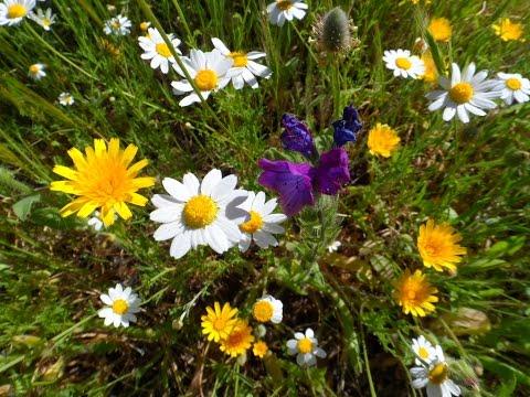 Луговые цветы дикая природа Испании Андалусия Михас Испания 10042017