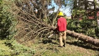 6. Tree Felling with the Kubota U35 Mini Excavator