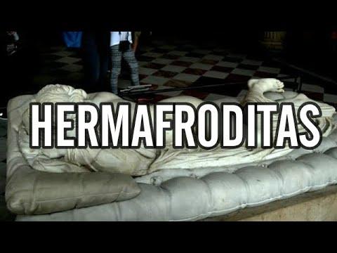 hermafroditas - El hermafroditismo es un término de la biología y zoología, con el cual se designa a los organismos que poseen a la vez órganos reproductivos usualmente asoc...