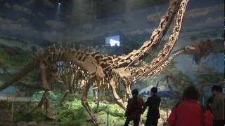 Zigong China  city photos gallery : Dinosauriermuseum Zigong, Sichuan - China Travel Channel