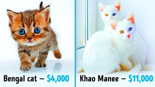 Video 19 Awesome Cats That Cost a Fortune MP3, 3GP, MP4, WEBM, AVI, FLV Oktober 2018