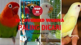 Video TERNYATA INI 10 LOVEBIRD WARNA PALING DICARI MP3, 3GP, MP4, WEBM, AVI, FLV Maret 2018