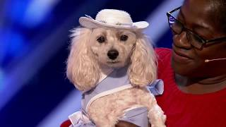 Mia Moore Counting Canine's Act Adds Up for the Judges - America's Got Talent 2017☞DISCLAIMER: I do not own this video, all rights belong to... Thank you for letting me upload your videos without blocking.