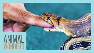 What To Do If You're Bitten By A Snake by Animal Wonders