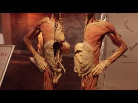 REAL BODIES - Imagine Exhibitions (Full Promo)