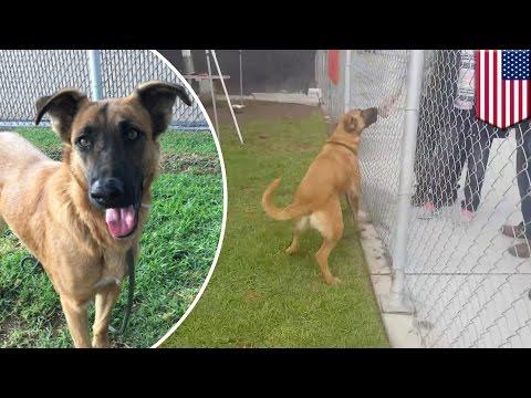 Pies w schronisku widzi jak jego dawna rodzina wybiera nowego psa! Spotyka ich słuszna kara!