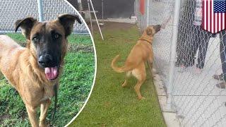 Zamknięty w schronisku pies widzi jak jego dawna rodzina wybiera innego psa! Spotkała ich słuszna kara!