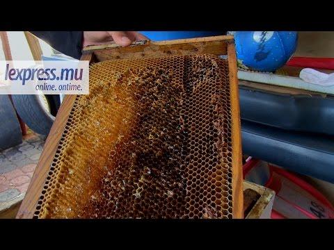 comment declarer ruches