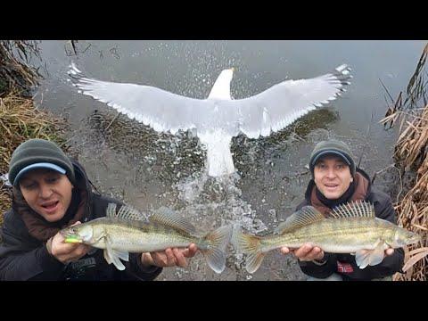 Pescuit  salau cu SURPRIZE
