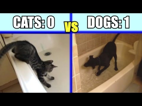 Cats Vs. Dogs: Which Animal Is The Funniest - Funny Comparison / Compilation PART 1