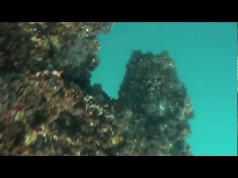 Spearfishing the oil rigs off of Mississippi 2012
