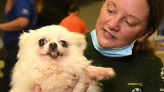 Dogs from South Korean meat trade arrive in U.S. by The Humane Society of the United States