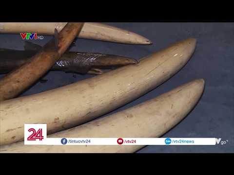 Những lầm tưởng phố biến về công dụng của ngà voi và sừng tê giác @ vcloz.com