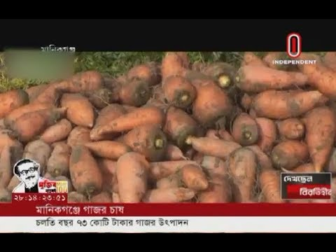 Carrots worth Tk 73cr set to be produced in Manikganj this year (17-02-20) Courtesy: Independent TV
