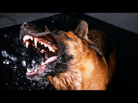 Dog Catching Water In Its Mouth In Slow Motion