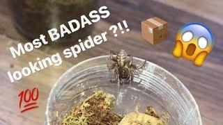 Video Unboxing my FIRST ever TRAPDOOR SPIDER !!! FINALLY got one !!! MP3, 3GP, MP4, WEBM, AVI, FLV Januari 2019