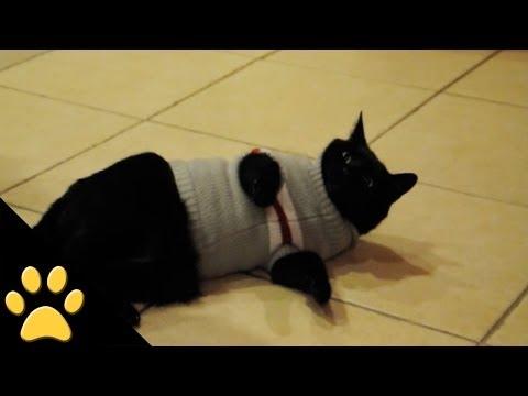 Smešni snimci sa mačkama – Božićna kompilacija