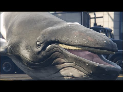 Grand Theft Auto V  Player Drops a Whale Into the