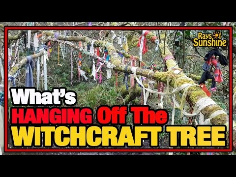 What's Hanging Off The Witchcraft Tree? (115)